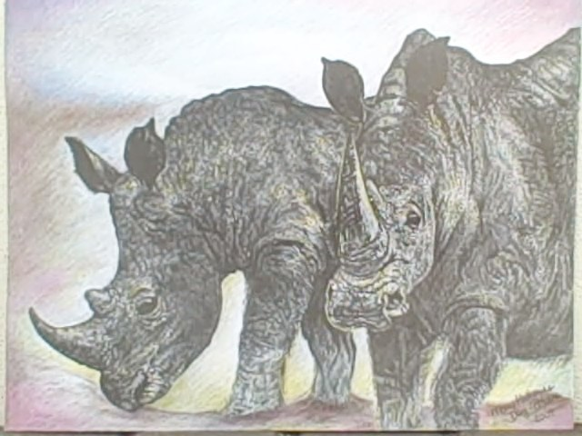 Two Rhinoceroses