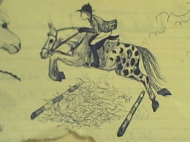 Three Horses - Close-up No. 2: Appaloosa Hunter